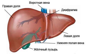 Аденома простаты лечение народными средствами